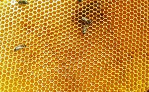 Нектар в пчелните килийки