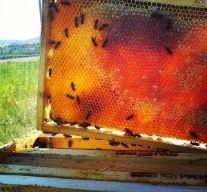 Пчелен мед призведен от пчелите на пчелин с. Кошарево