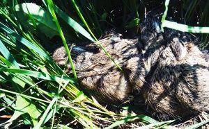 Диви зайчета бебета
