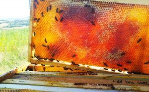 Зрял пчелен мед с червен отенък