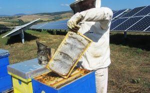 Зрял пчелен мед в дебела медена пита