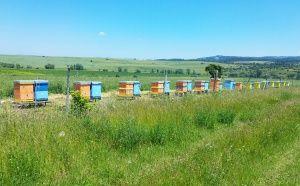 Пчелин с. Кошарево запад през лятото