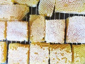 Пчелен мед в пита
