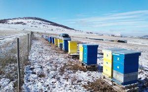 Кошарево запад през зимата