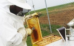 Пролетен преглед и разпечатване на мед