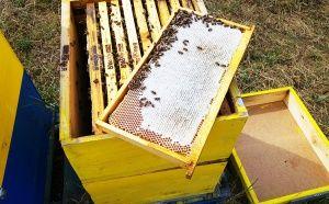 Зрял пчелен мед